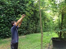 lucato-piante-potatura
