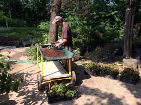lucato-vivai_piante-da-giardino